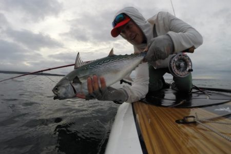 One of the most exciting inshore gamefish