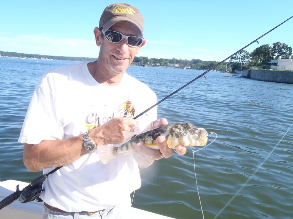 The return of blowfish to North Shore waters has added additional spice to my mixed bag.